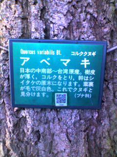 この木なんの木決定木
